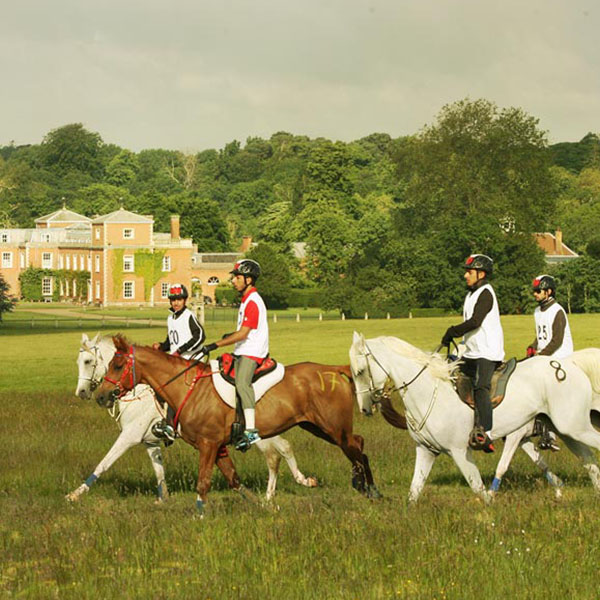Equestrian-Euston-Park-HP-16-HR